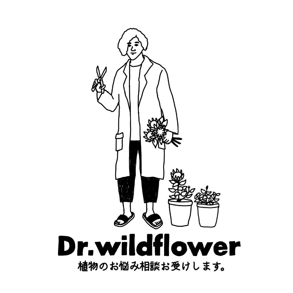 Dr.WILD FLOWER